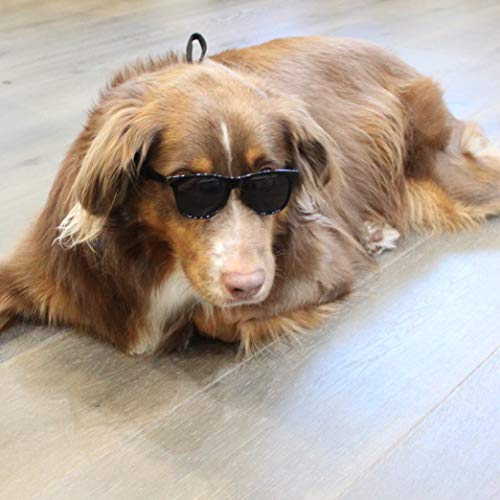 G006 Dog pet 80s mirror lens sports Sunglasses glasses goggles w retainer strap medium breeds 20-50lbs (Medium Black-dark lens,)