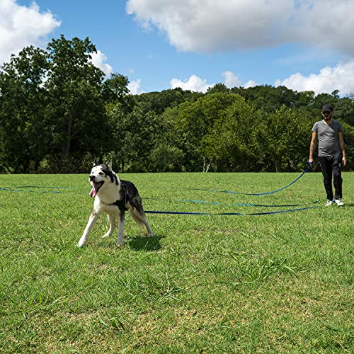 Hi Kiss Dog/Puppy Obedience Recall Training Agility Lead – 15ft 20ft 30ft 50ft 100ft Training Leash – Great for Training, Play, Camping, or Backyard – Black 20ft