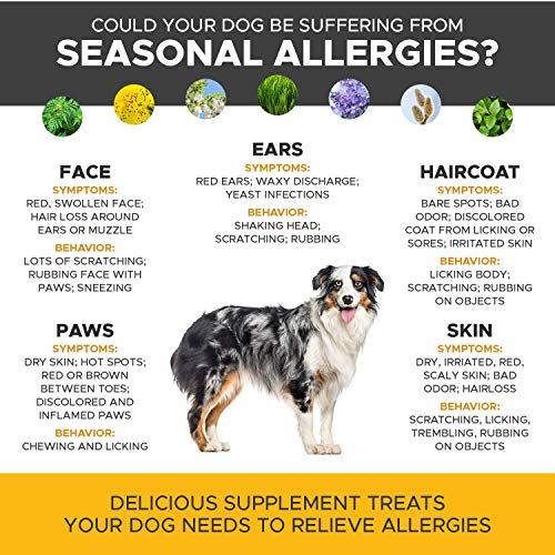 PetHonesty Allergy Relief Immunity Supplement for Dogs – Omega 3 Salmon Fish Oil, Colostrum, Digestive Prebiotics & Probiotics – for Seasonal Allergies + Anti Itch, Skin Hot Spots Soft Chews