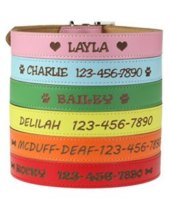 Custom Catch Personalized Dog Collar – Engraved Soft Leather in XS, Small, Medium or Large Size, ID Collar, No Pet Tags or Embroidered Names