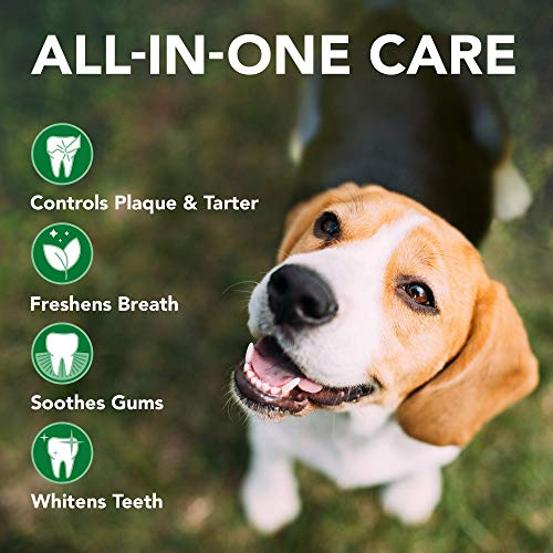 Vet's Best Dog Toothbrush and Enzymatic Toothpaste Set | Teeth Cleaning and Fresh Breath Kit with Dental Care Guide| Vet Formulated