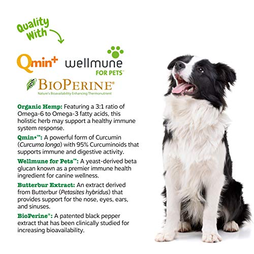 Allergy Immune Supplement with Hemp for Dogs – For Skin & Sinus + Seasonal Pollen Dog Allergies – With Cod Liver Fish Oil, Curcumin, BioPerine, Vitamin C & Quercetin – Omega 3 & 6 Support – 90 Chews
