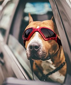 PETLESO Large Dog Goggles, Eye Protection Pet Goggles Sunglasses for Medium Large Dogs- Red