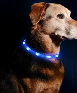 Illumiseen LED Dog Necklace Collar – USB Rechargeable Loop – Available in 6 Colors – Makes Your Dog Visible, Safe & Seen