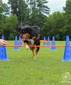 Lord Anson Dog Agility Hurdle Cone Set – Canine Agility Training Set – Obedience, Agility, and Rehabilitation – 8 Agility Cones and 4 Agility Rods