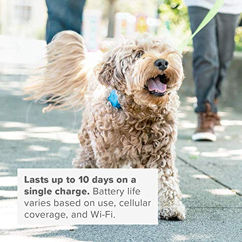 Whistle Go – Health & Location Tracker for Pets – Waterproof GPS Pet Tracker, 10 Day Battery, Pet Fitness Tracker fits on Collar or Harness – Blue