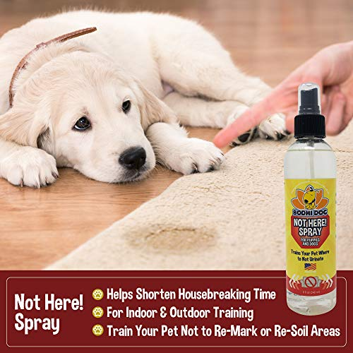 Bodhi Dog Not Here! Spray | Trains Your Pet Where Not to Urinate | Repellent & Training Corrector for Puppies & Dogs | for Indoor & Outdoor Use | No More Marking | Made in The USA