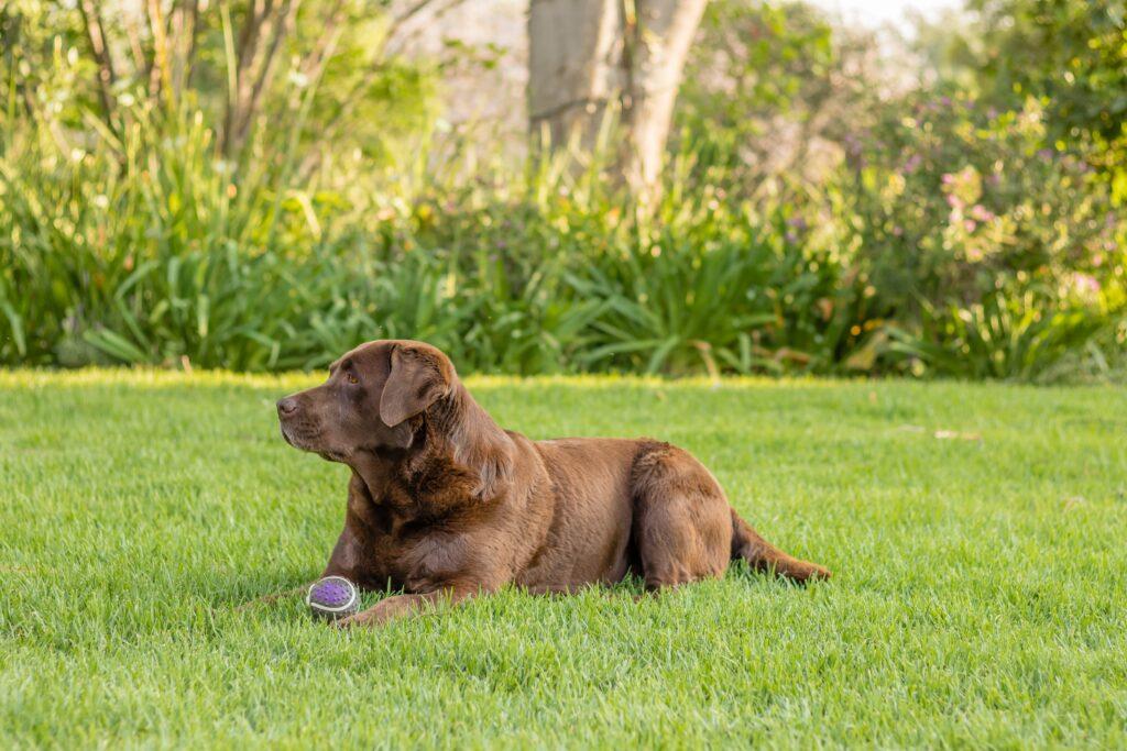 Dog training behavior training